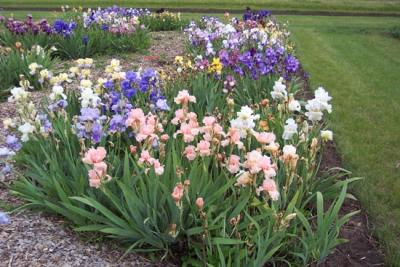 Gardening tips for Maryland in June