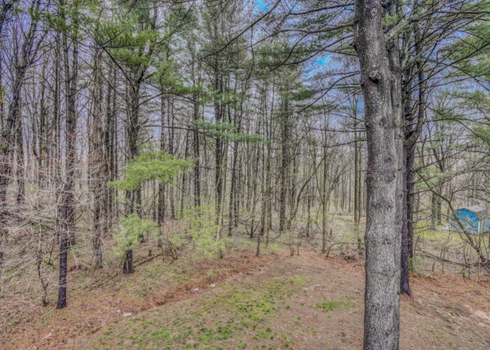 198 Donizetti Ct., wooded part of property