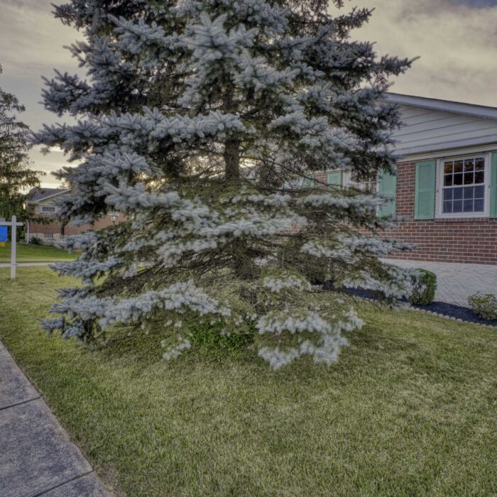 2502 Lampost Lane, front yard with big tree