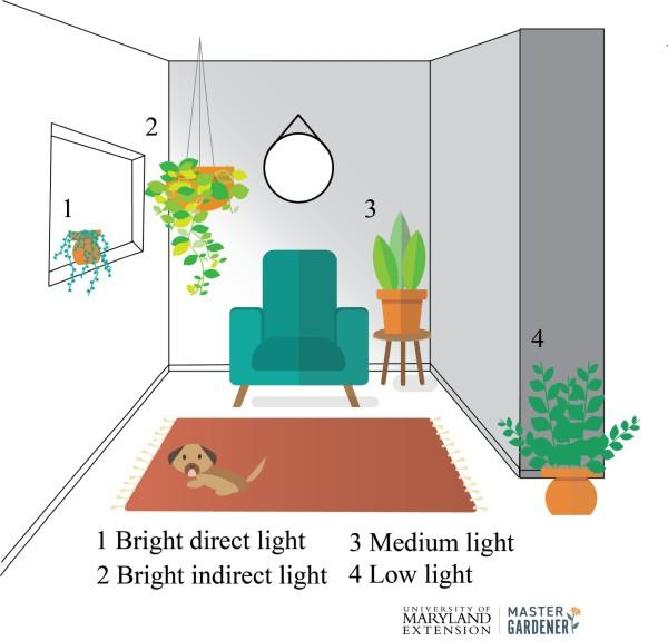 Natural lighting for indoor plants drawing